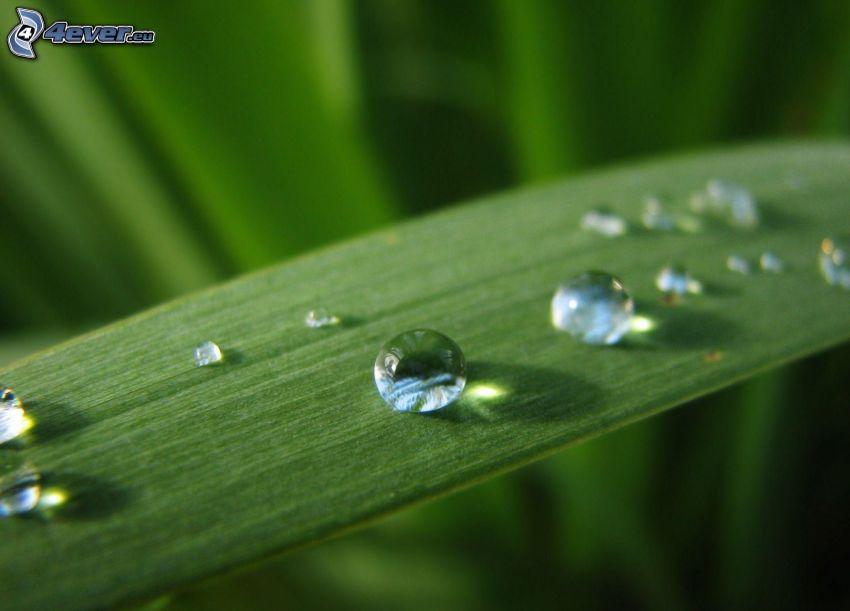 gouttes d'eau, feuille verte