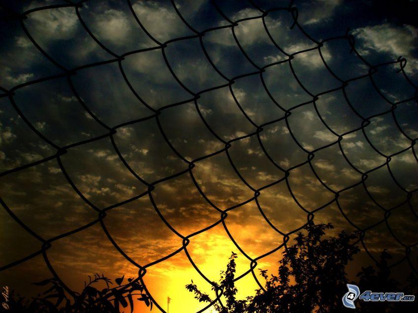 grillage, coucher du soleil, ciel sombre, silhouettes d'arbres