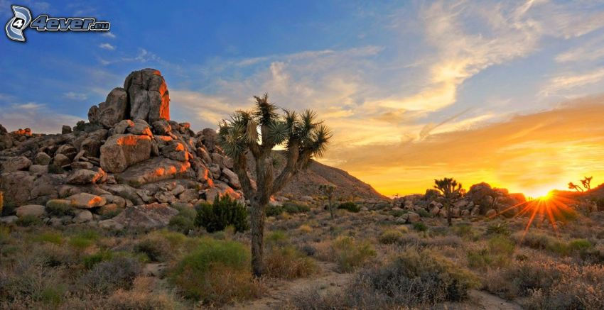 Joshua Tree National Park, rochers, coucher du soleil