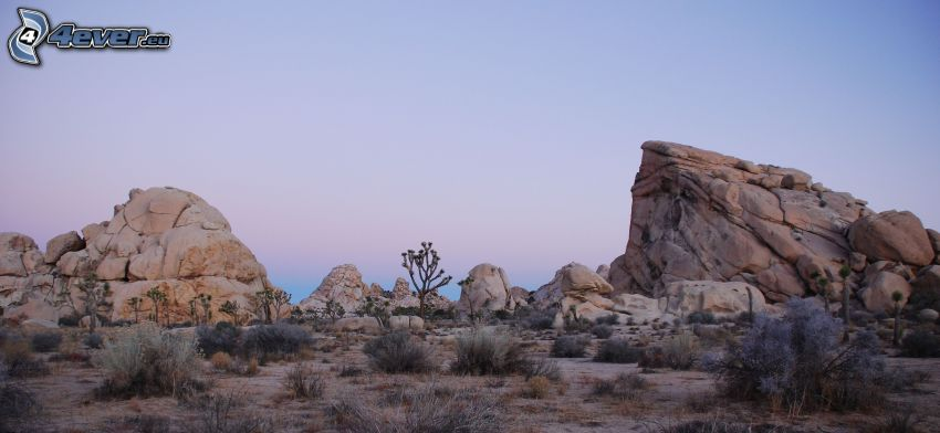 Joshua Tree National Park, rochers