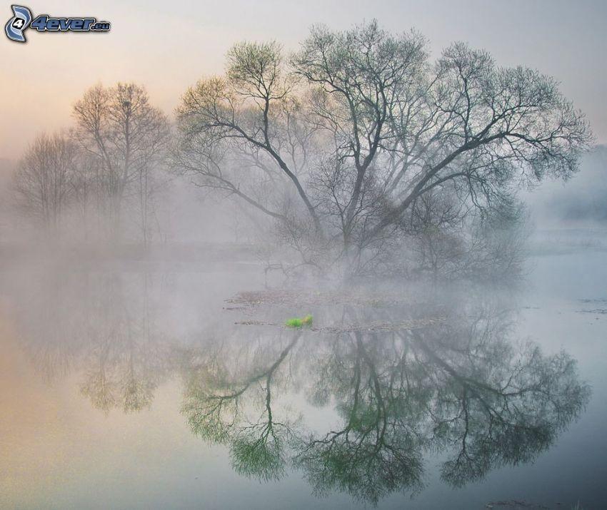 lac, arbre, reflexion, brouillard au sol