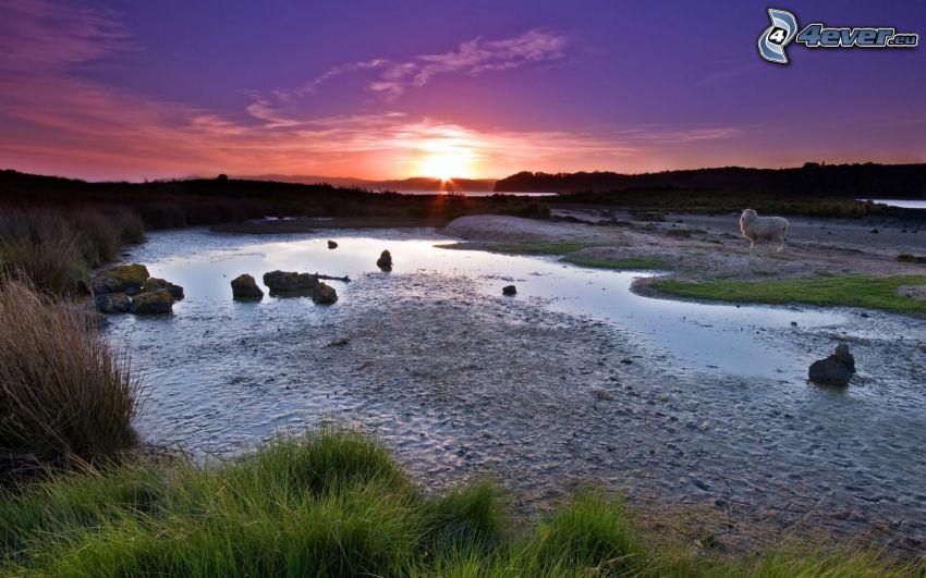 lac, mouton, coucher du soleil