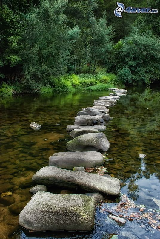 lac, trottoir, pierres, arbres