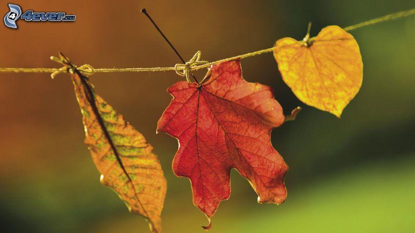les feuilles d'automne, feuilles colorées, corde