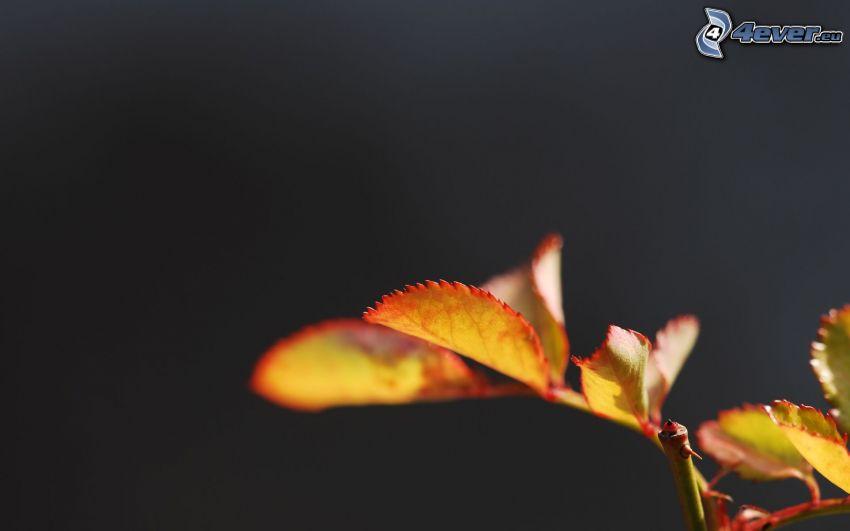 les feuilles d'automne, feuilles jaunes