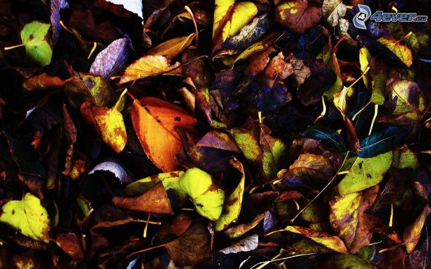 les feuilles d'automne, feuilles mouillées