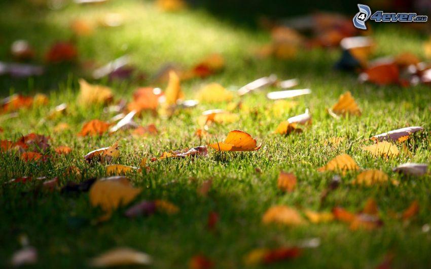 les feuilles d'automne, l'herbe