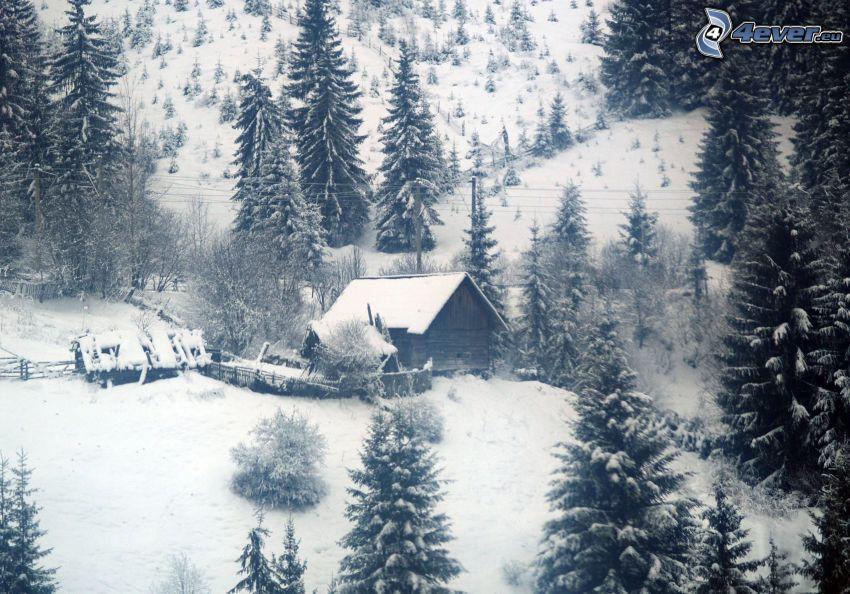 maison enneigée, forêt de conifères enneigée, collines enneigées