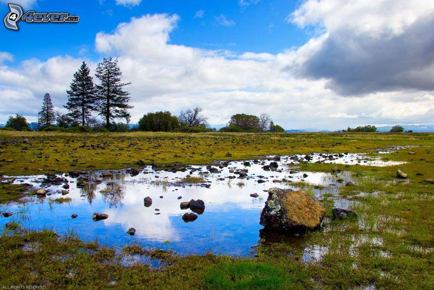 marais, pierres, l'herbe