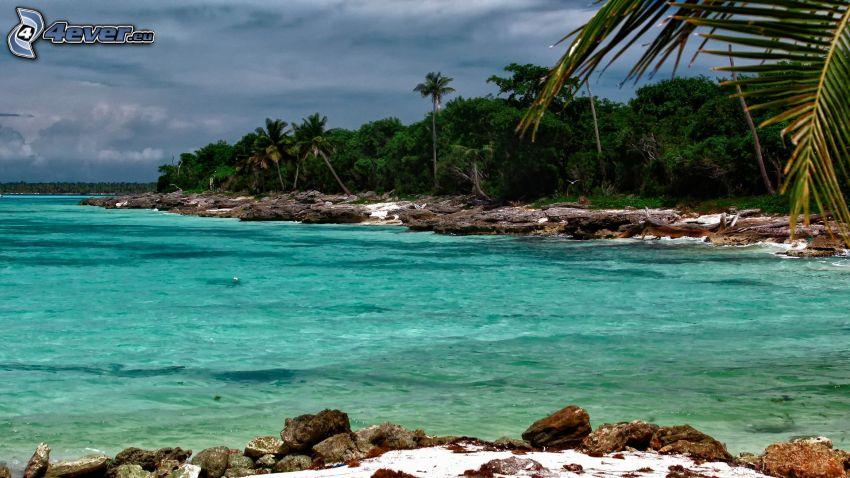 côte, mer, palmiers