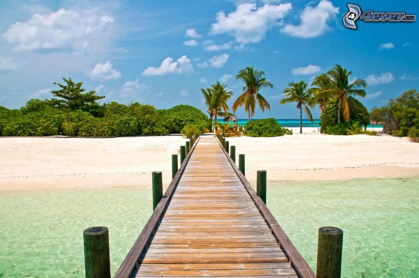 jetée en bois, palmiers, plage de sable, vert