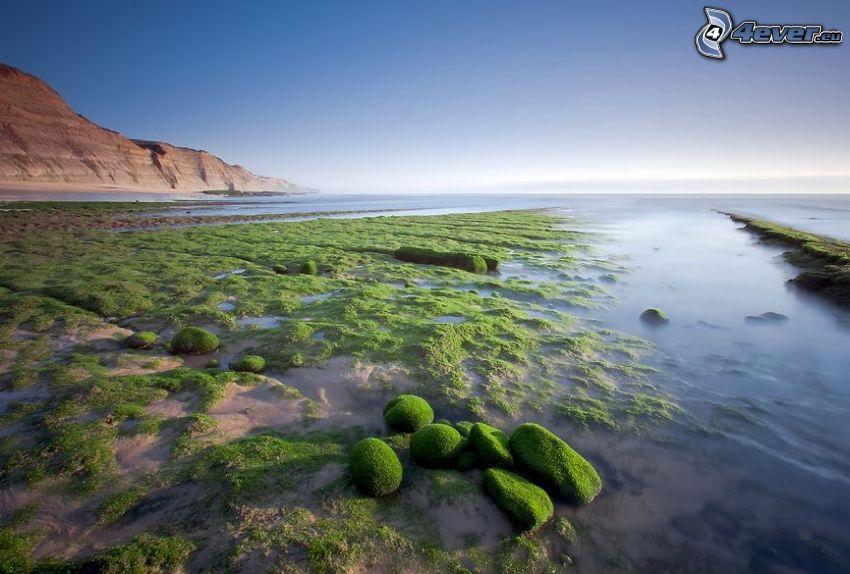 mer, les algues, pierres, mousse