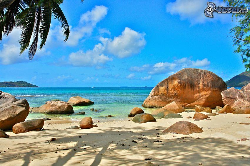mer, plage de sable, pierres, palmier