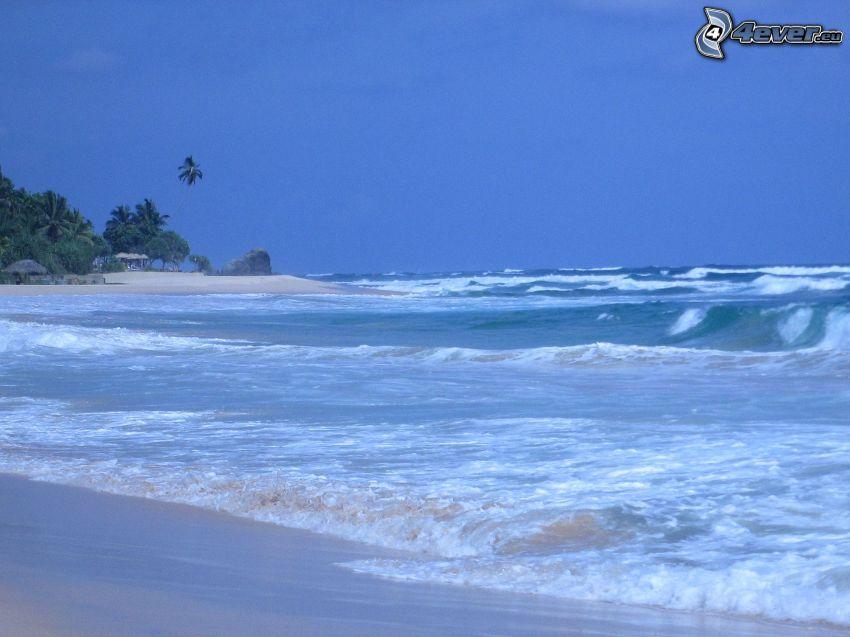 mer, vagues, plage de sable, palmiers