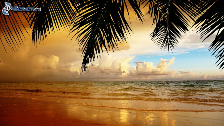 ouvert mer, plage de sable, palmiers