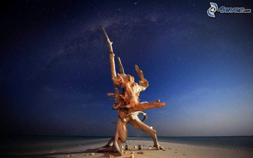 tronc, plage de sable, mer, ciel de la nuit