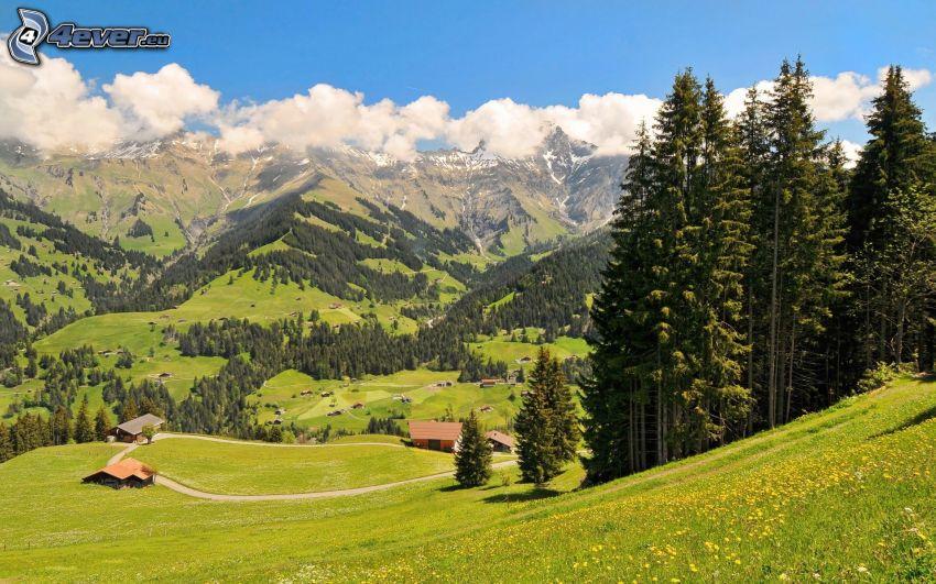 Alpes, vallée, prairie, forêt de conifères