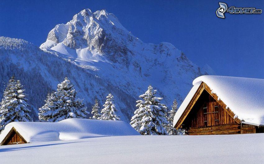 chalets enneigés, cabanons, montagne, neige, forêt