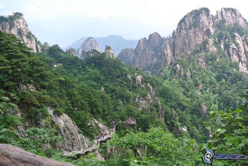 Huangshan, montagnes rocheuses, vert
