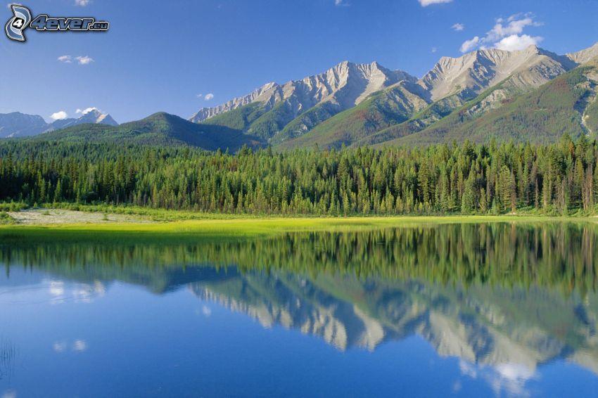 lac, collines, forêt de conifères