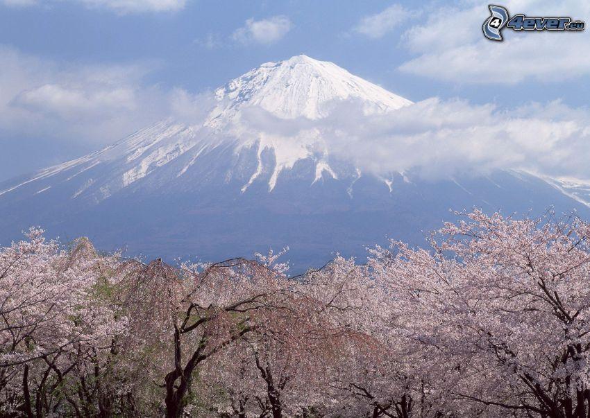 mont Fuji, arbres fleuris, nuages