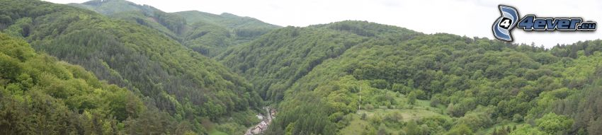 montagne, vallée, forêt