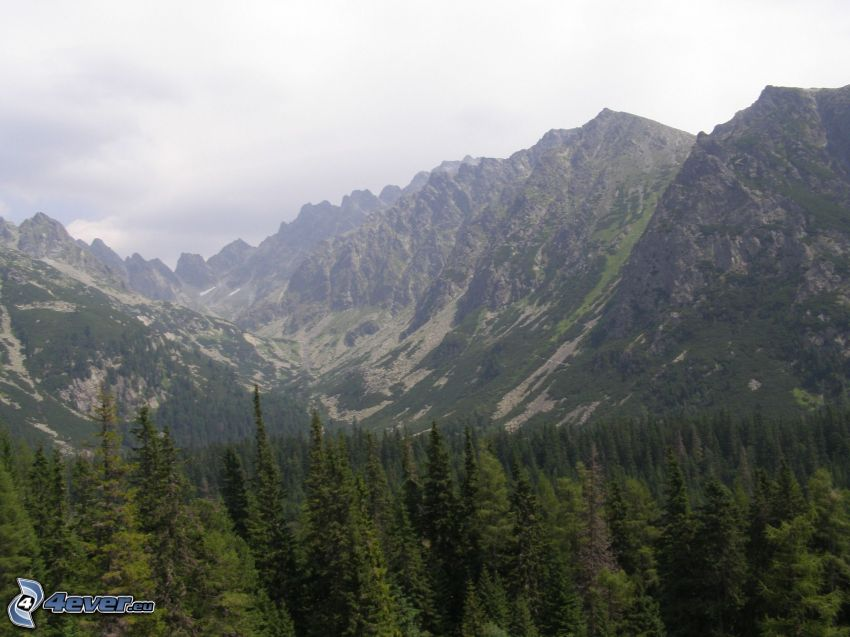 montagnes, montagne, forêt