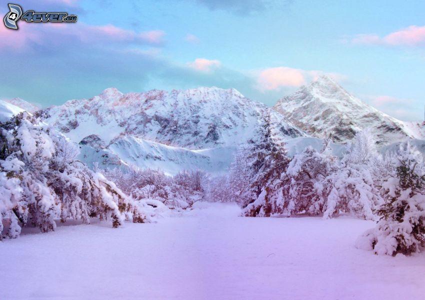 montagnes enneigées, prairie enneigée, arbres enneigés