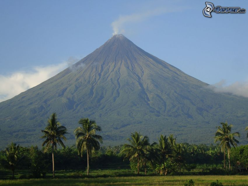 Mount Mayon, palmiers, Philippines