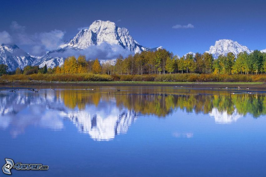 Mount Moran, Wyoming, montagnes rocheuses, lac, forêt