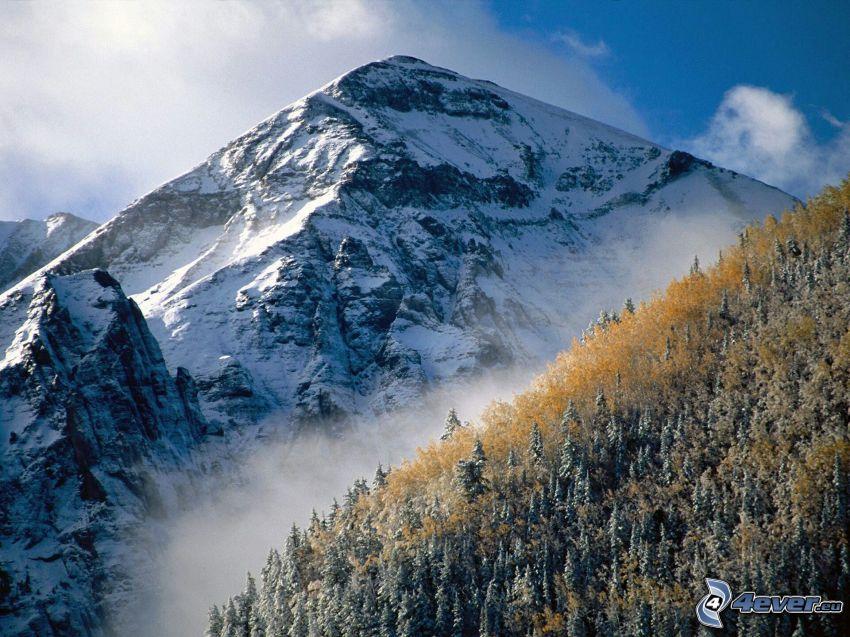 Mountains Telluride, Colorado, colline, montagne, forêt de conifères enneigée