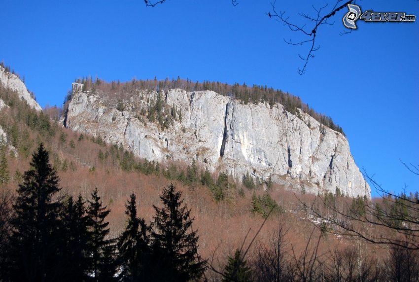 Totes Gebirge, rochers, falaise, arbres secs