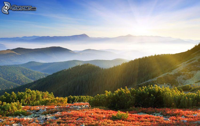 vue sur le paysage, collines, arbres conifères, rayons du soleil, couche d'inversion