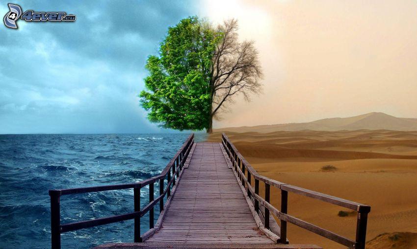 nature, jetée en bois, arbre, mer, désert