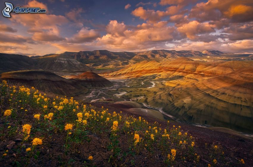 Painted Hills, fleurs jaunes, nuages, Oregon, USA