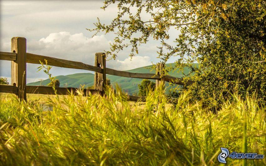 palissades, l'herbe, arbre