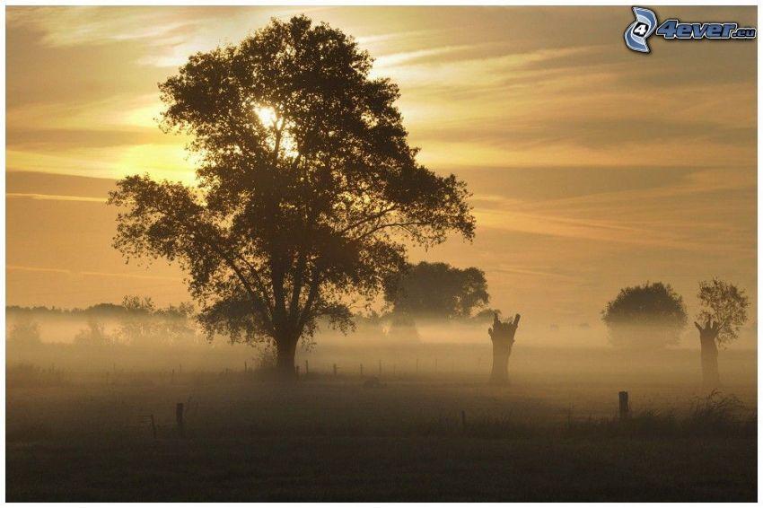 arbre rameux, arbre solitaire, brouillard au sol, couchage de soleil derrière un arbre
