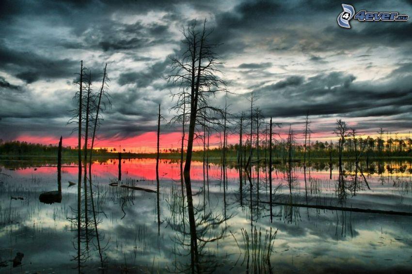 arbres secs, marais, reflexion
