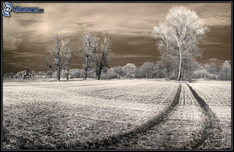 arbres solitaires, grand arbre, arbre dans le champ, chemin de campagne, affűt