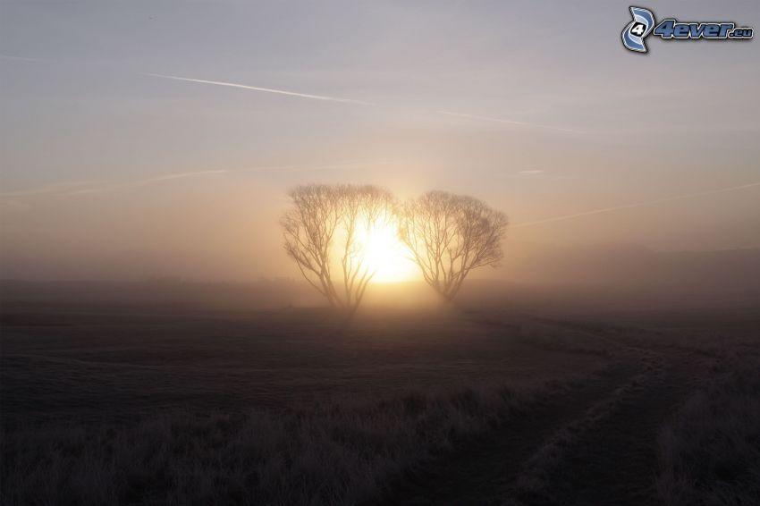 champ, arbres, coucher du soleil, cerise