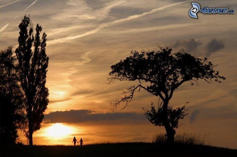 coucher du soleil, silhouette du couple, amour, silhouettes d'arbres, peuplier, arbre rameux