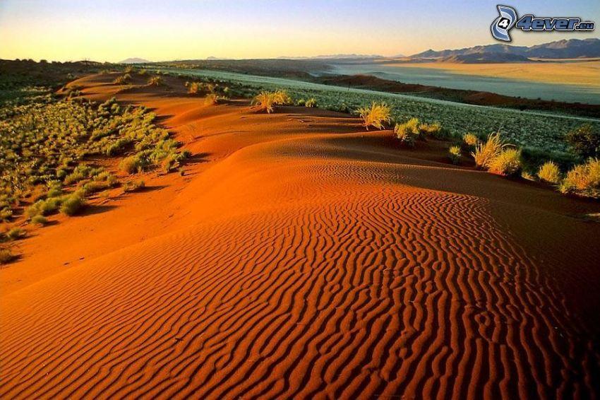 dunes de sable, désert, steppe