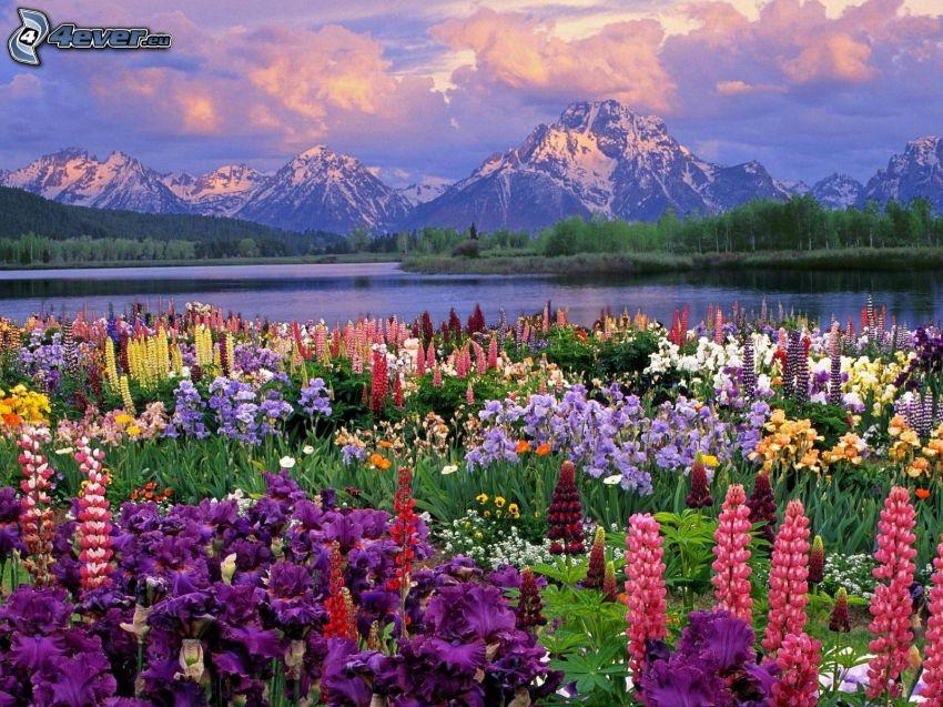 Fleurs de printemps, montagnes enneigées, rivière