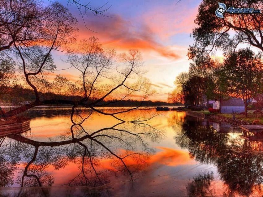Lac calme du soir, arbre au bord du lac