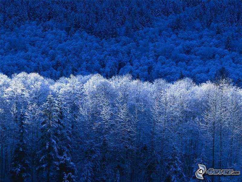 l'hiver, givre, forêt, montagne