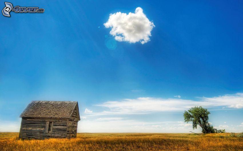 maison en bois, arbre solitaire, nuage, ciel bleu, herbe jaune