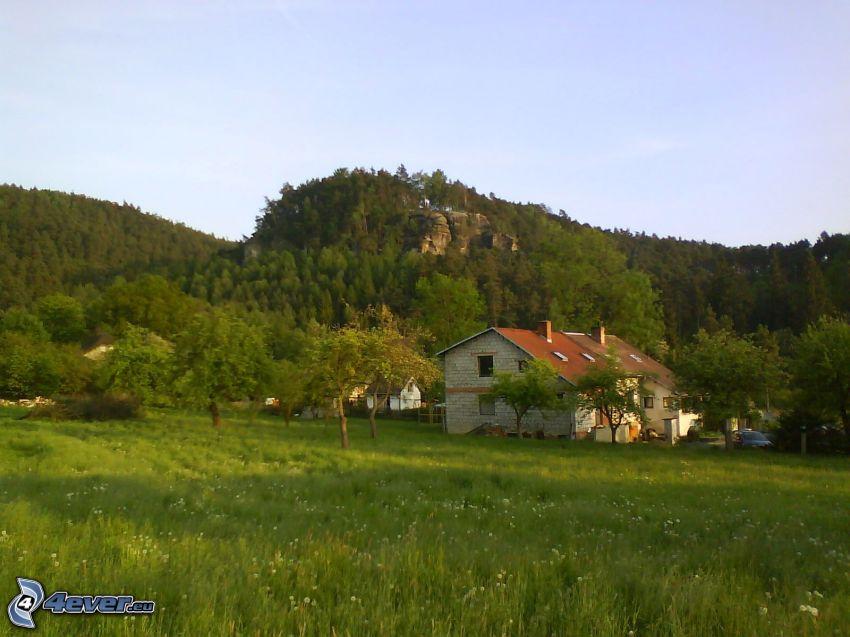 montagne, forêt, maison, colline, village