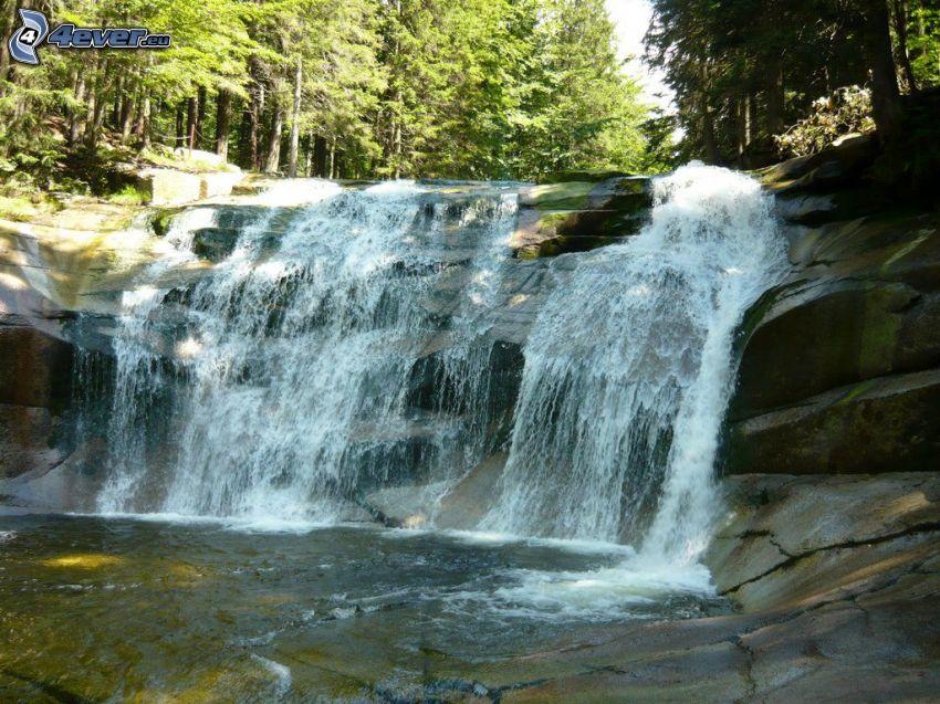 Mumlavský cascade, forêt