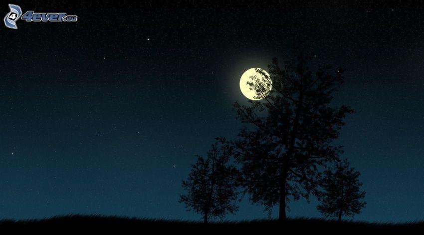 nuit, lune, silhouettes d'arbres