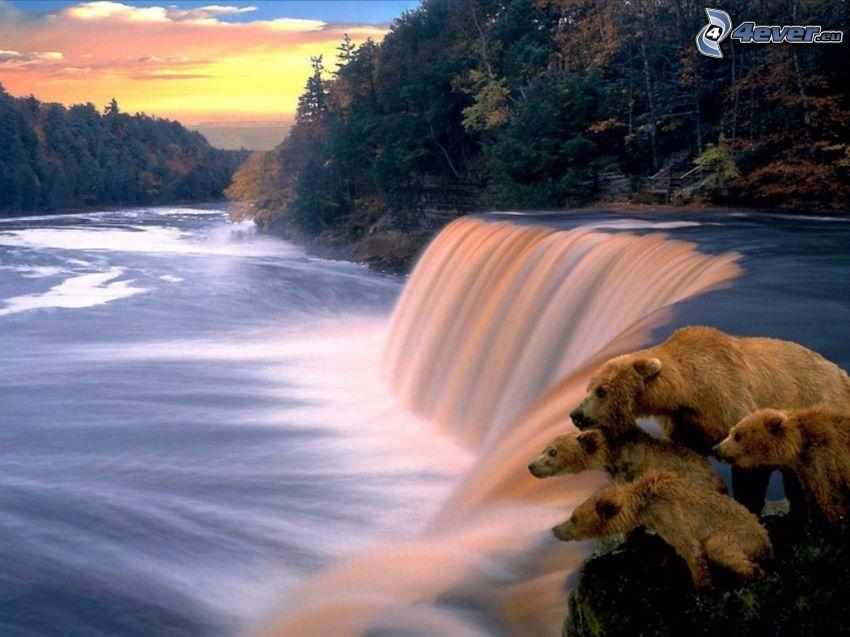 ours sur une chute d'eau, rivière, forêt